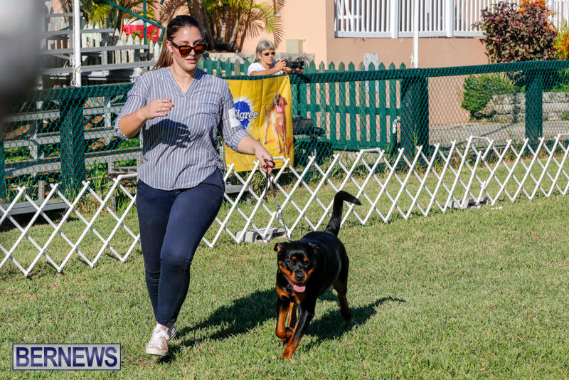 International-Dog-Show-Bermuda-October-21-2017_8152