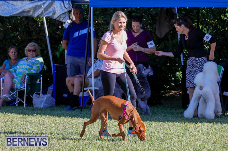 International-Dog-Show-Bermuda-October-21-2017_8159