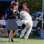 International Dog Show Bermuda, October 21 2017_8164