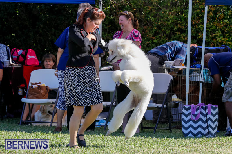 International-Dog-Show-Bermuda-October-21-2017_8164