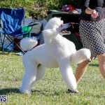International Dog Show Bermuda, October 21 2017_8171