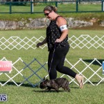 International Dog Show Bermuda, October 21 2017_8172