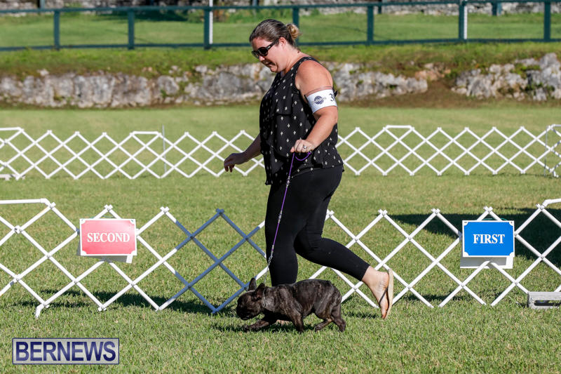 International-Dog-Show-Bermuda-October-21-2017_8172