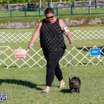 International Dog Show Bermuda, October 21 2017_8183