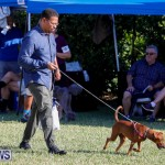 International Dog Show Bermuda, October 21 2017_8193
