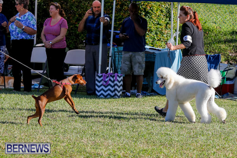 International-Dog-Show-Bermuda-October-21-2017_8195