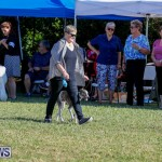 International Dog Show Bermuda, October 21 2017_8200