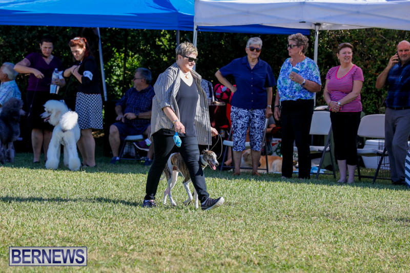International-Dog-Show-Bermuda-October-21-2017_8200