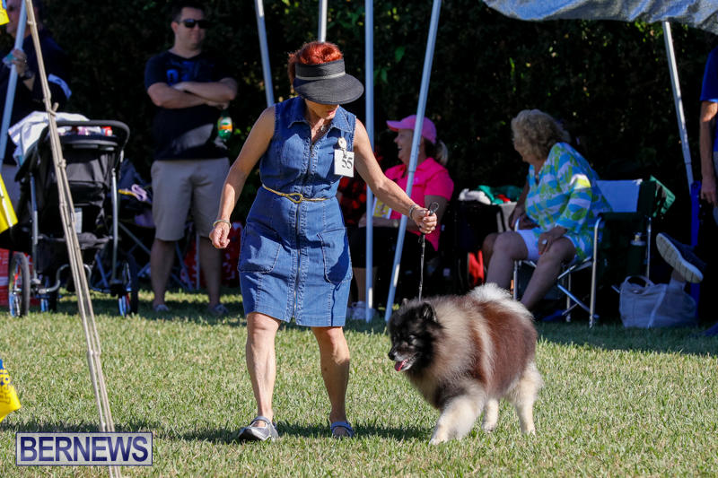 International-Dog-Show-Bermuda-October-21-2017_8202