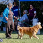 International Dog Show Bermuda, October 21 2017_8205