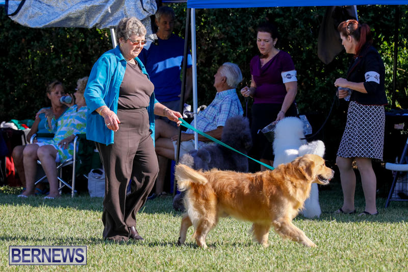 International-Dog-Show-Bermuda-October-21-2017_8205