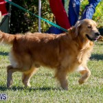International Dog Show Bermuda, October 21 2017_8214