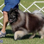 International Dog Show Bermuda, October 21 2017_8221