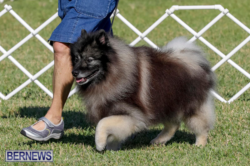 International-Dog-Show-Bermuda-October-21-2017_8221