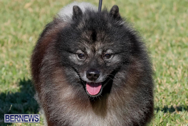 International-Dog-Show-Bermuda-October-21-2017_8228