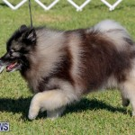 International Dog Show Bermuda, October 21 2017_8240