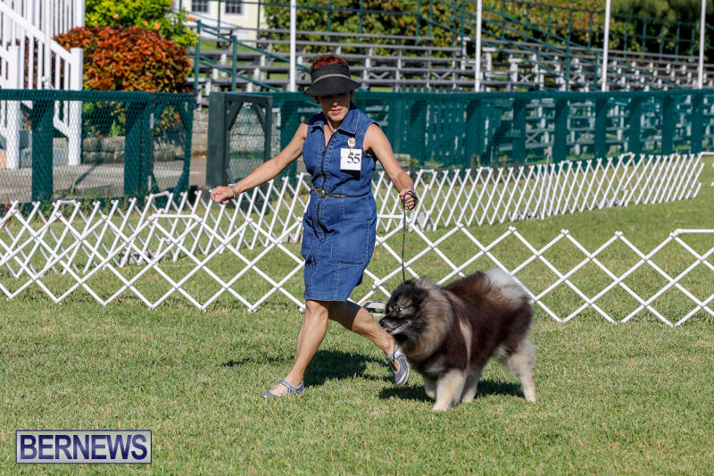 International-Dog-Show-Bermuda-October-21-2017_8251