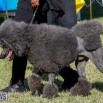International Dog Show Bermuda, October 21 2017_8265