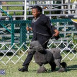 International Dog Show Bermuda, October 21 2017_8269