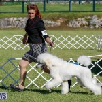 International Dog Show Bermuda, October 21 2017_8276