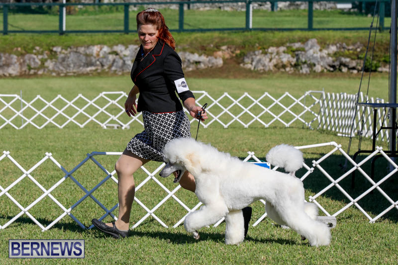 International-Dog-Show-Bermuda-October-21-2017_8276