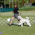 International Dog Show Bermuda, October 21 2017_8279