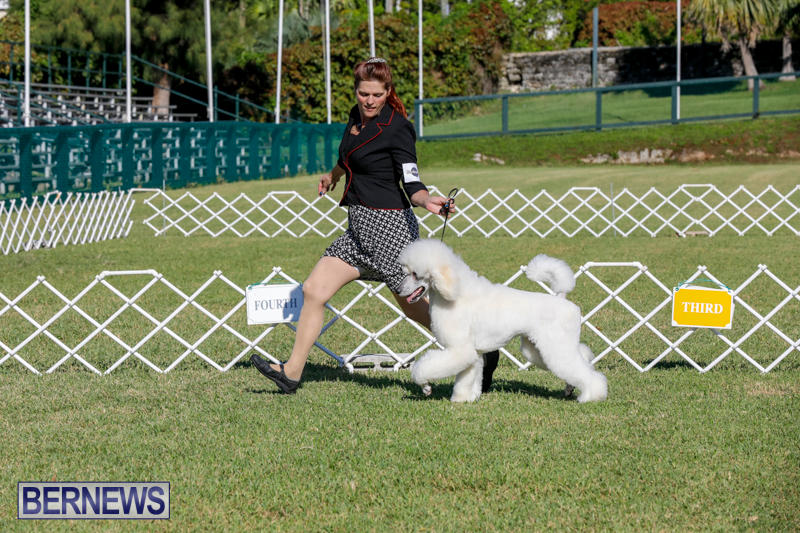International-Dog-Show-Bermuda-October-21-2017_8279