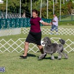 International Dog Show Bermuda, October 21 2017_8296