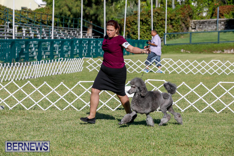International-Dog-Show-Bermuda-October-21-2017_8296