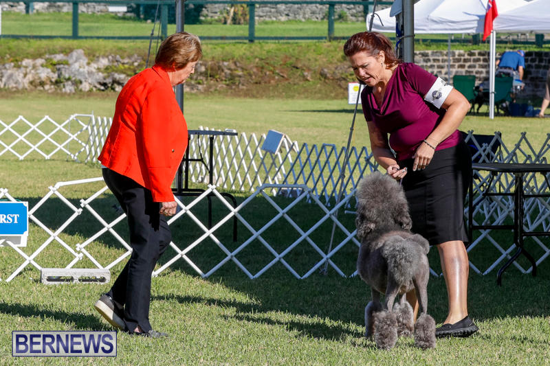 International-Dog-Show-Bermuda-October-21-2017_8302