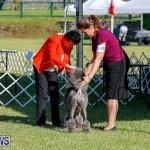 International Dog Show Bermuda, October 21 2017_8305