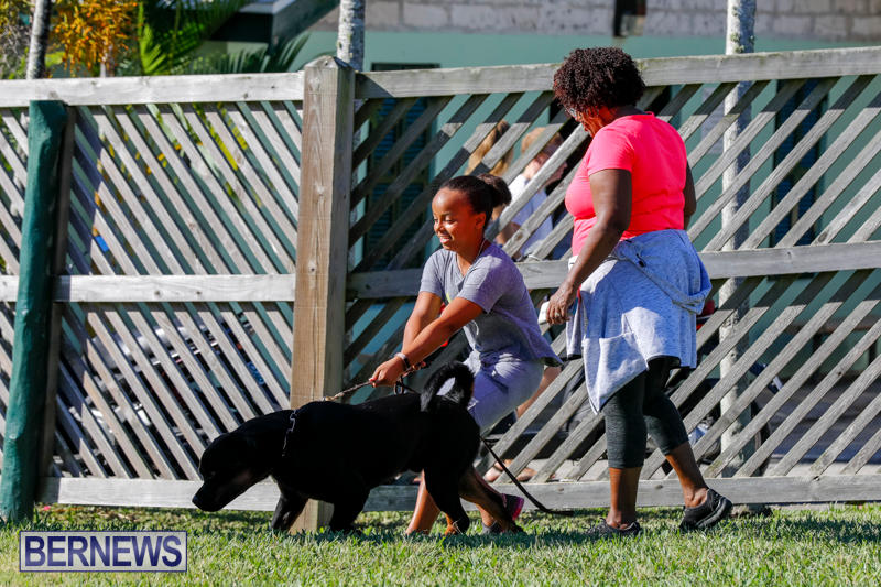 International-Dog-Show-Bermuda-October-21-2017_8316