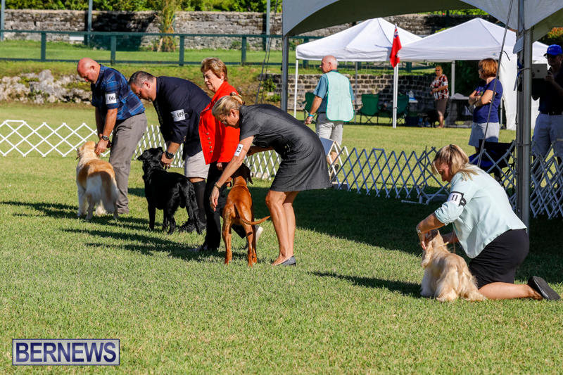International-Dog-Show-Bermuda-October-21-2017_8321