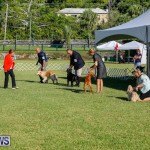 International Dog Show Bermuda, October 21 2017_8322
