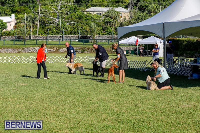 International-Dog-Show-Bermuda-October-21-2017_8322