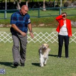 International Dog Show Bermuda, October 21 2017_8324