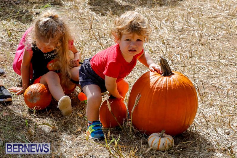 JJ-Produce-Pumpkin-Picking-Bermuda-October-14-2017_6035