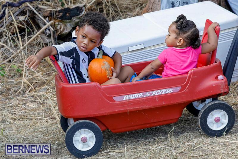 JJ-Produce-Pumpkin-Picking-Bermuda-October-14-2017_6060
