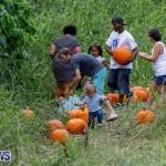 J&J Produce Pumpkin Picking Bermuda, October 14 2017_6100