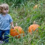 J&J Produce Pumpkin Picking Bermuda, October 14 2017_6103