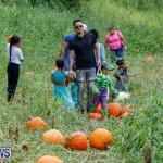 J&J Produce Pumpkin Picking Bermuda, October 14 2017_6104