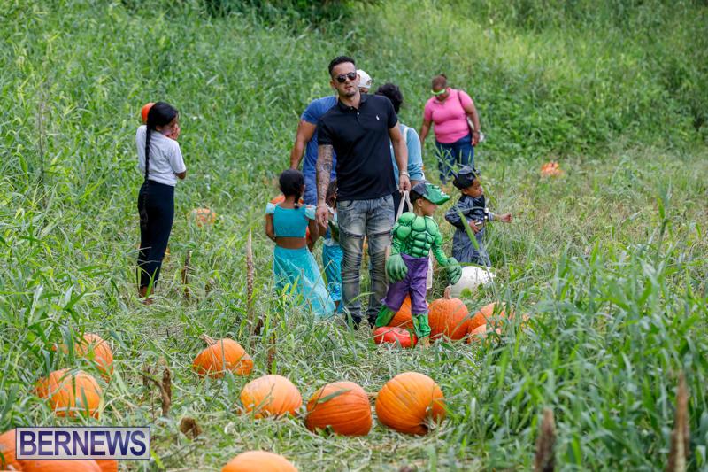 JJ-Produce-Pumpkin-Picking-Bermuda-October-14-2017_6104