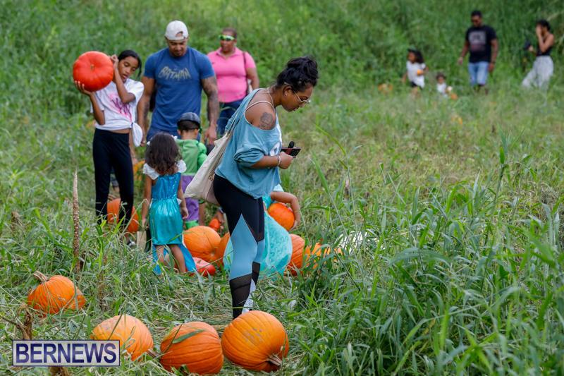 JJ-Produce-Pumpkin-Picking-Bermuda-October-14-2017_6106