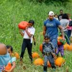 J&J Produce Pumpkin Picking Bermuda, October 14 2017_6111