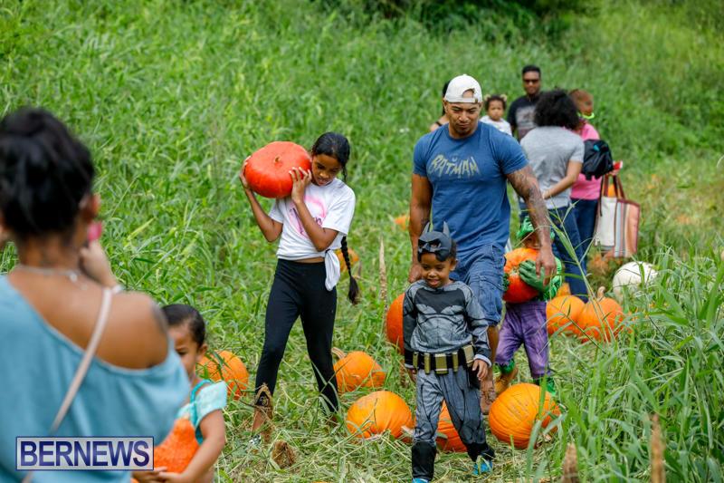 JJ-Produce-Pumpkin-Picking-Bermuda-October-14-2017_6111