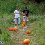 J&J Produce Pumpkin Picking Bermuda, October 14 2017_6121