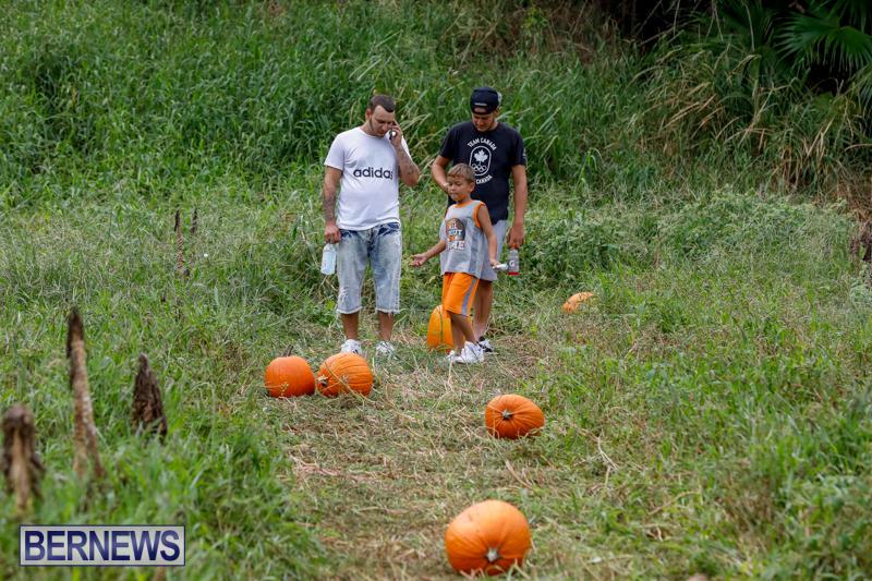 JJ-Produce-Pumpkin-Picking-Bermuda-October-14-2017_6121