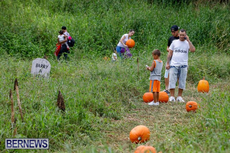 JJ-Produce-Pumpkin-Picking-Bermuda-October-14-2017_6124