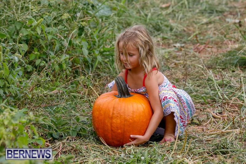 JJ-Produce-Pumpkin-Picking-Bermuda-October-14-2017_6125
