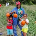 J&J Produce Pumpkin Picking Bermuda, October 14 2017_6141